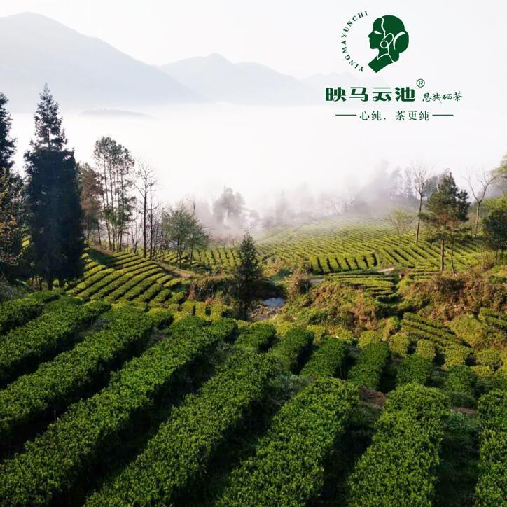 加推人工智能名片让传统茶业也玩起互联网营销.jpg
